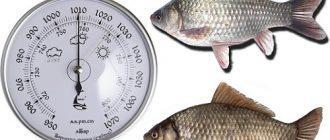При каком давлении клюет рыба