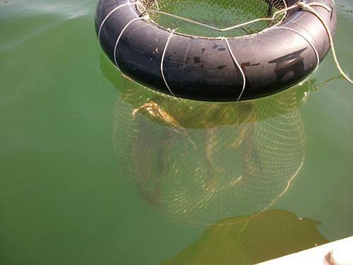 Как сделать садок для рыбы своими руками