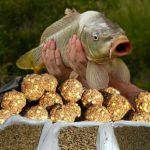 Прикормка для карпа своими руками рецепты