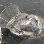 Садок для рыбы