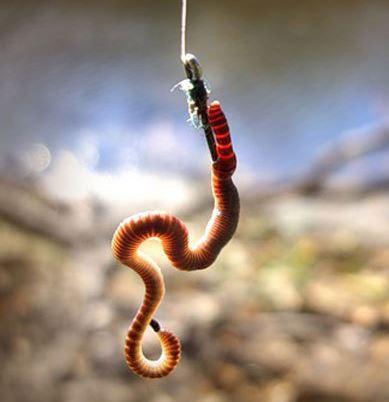 Как насаживать червя