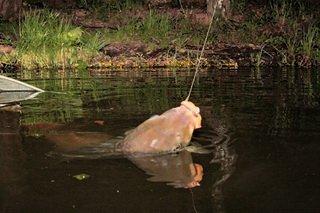 Ловля карпа ночью
