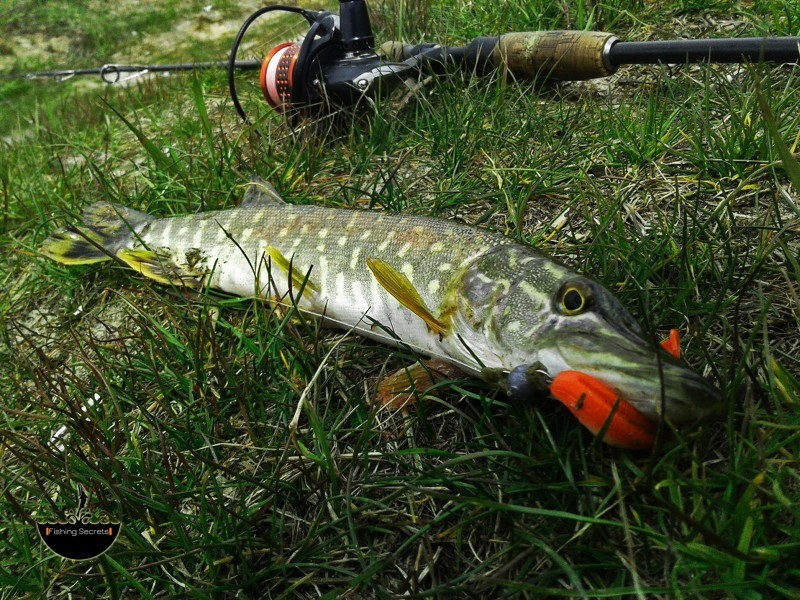 Рыба и спиннинг
