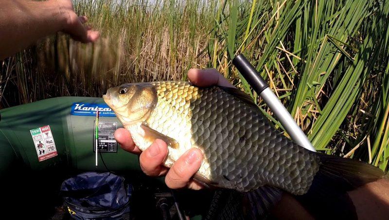 видео рыбалка на пруду летом карась карп