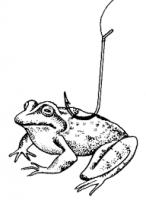 Вариант насадки лягушки