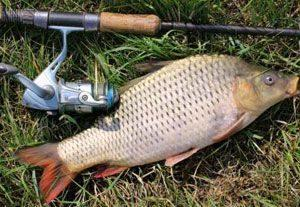 Поплавочная удочка для рыбалки