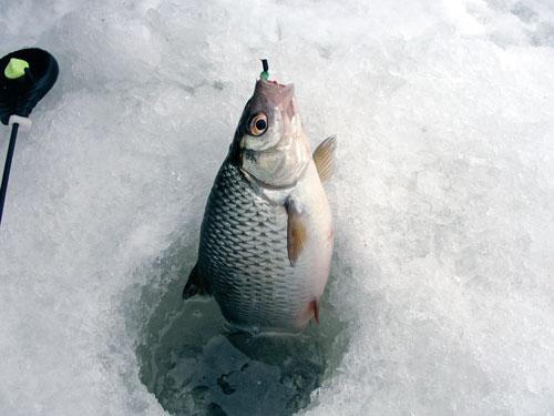 Мормышки для зимней рыбалки